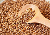 Germinated wheat grain in the wooden spoon — Stock Photo