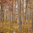 Autumn or fall forest - Stockfoto