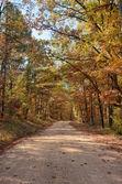 Strada di paese attraverso alberi di autunno — Foto Stock
