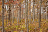Autumn or fall forest — Foto de Stock