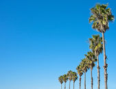 Palm tree blue sky frame — Stock Photo