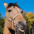 Portrait of the beautiful horse. Looks because of a fencing. — Stock Photo