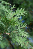 A part of christmas abies — Stock Photo