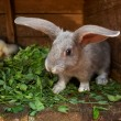 Stock Photo: Bunny at home
