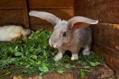 Bunny at home — Stock Photo