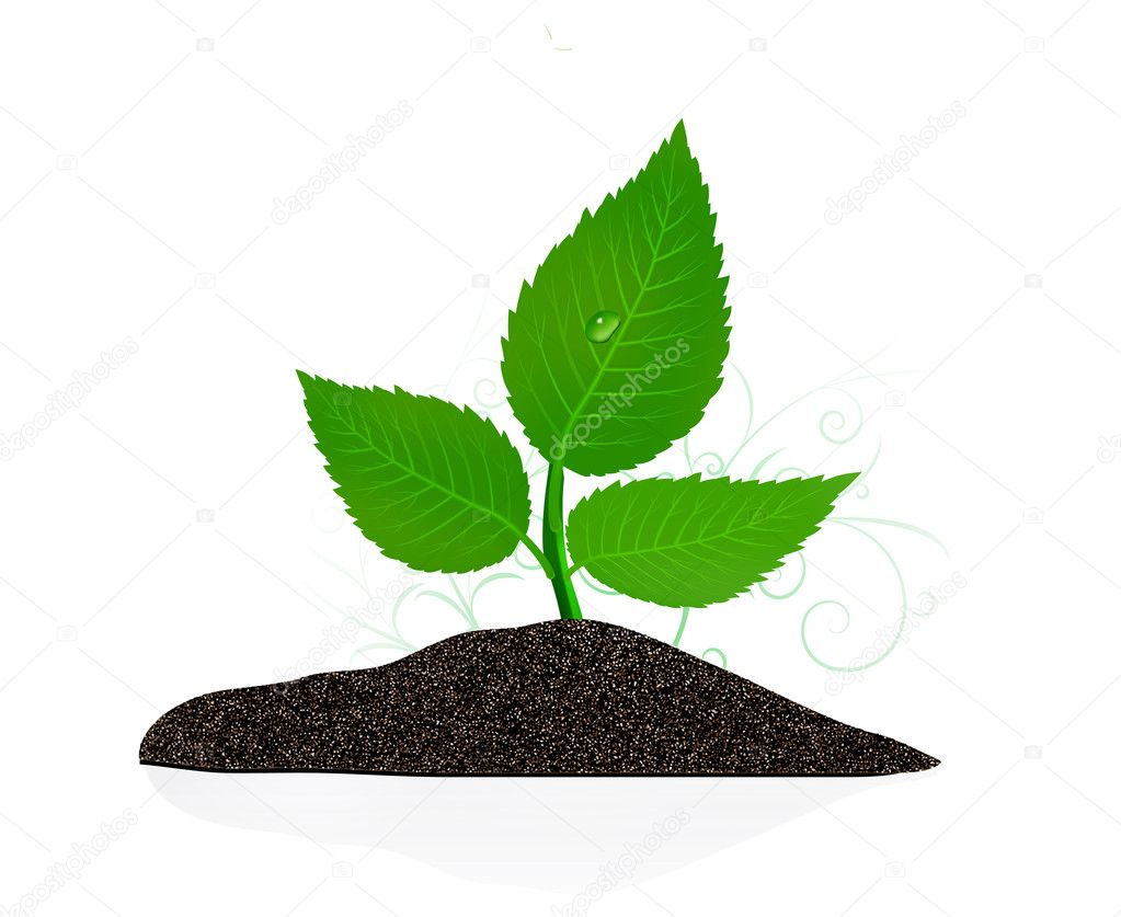Young plant on the white backgrounds. Vector illustration — Stock Vector #5131673