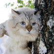 Stock Photo: Frightened cat on the twig of tree