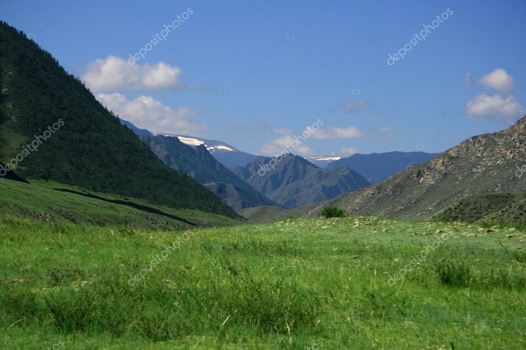 Nature landscape, meadow and mountains, wildlife of Altay — Stock Photo #4143652