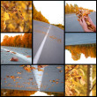 Autumn season beautiful, collage — Stock Photo