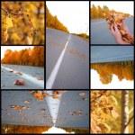 Autumn season beautiful, collage — Stock Photo #4295783