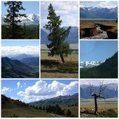 Nature landscape collage — Stock Photo