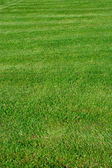 Beautiful green grass — Stock Photo