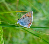 Butterfly on green grass — Stock Photo