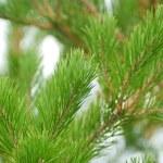 jovem pele-árvore — Foto Stock