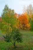 Autumn at the park — Stock Photo