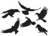 Crow silhouette — Stock Photo