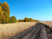 Autumn landscape — Stockfoto