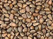 Tło z orzechów cedrowych — Zdjęcie stockowe