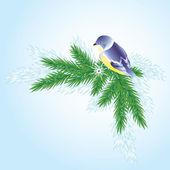 A bird on a branch of pine. — Stock Vector