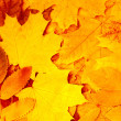 Autumn leaves — Foto de stock #4001016