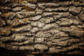 Bark of oak — Stock Photo