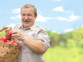 Harvesting a apple — Stock Photo