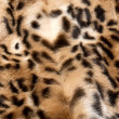 Leopard fur - Stock Photo