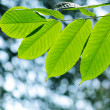 green leaves — Stock Photo #4011766