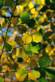 Outono, as folhas coloridas — Foto Stock