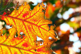 Autumn, colorful leaves — Stock Photo
