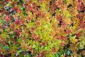 Moras flora. — Stockfoto