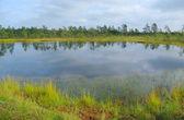 Bog lake. — Stock Photo