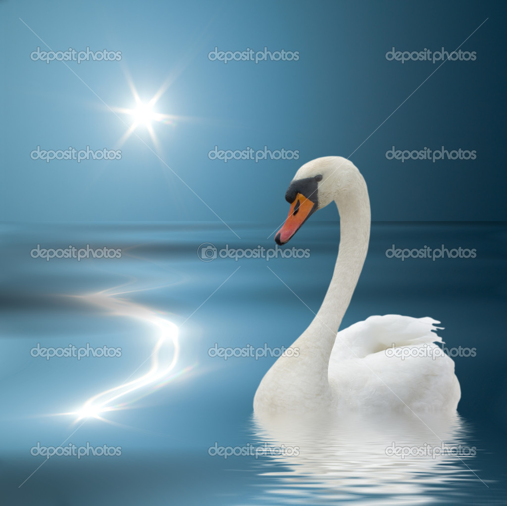 Swan swimming on the blue water. — Stock Photo #4628797