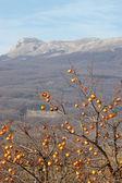 Oriental persimmon tree and chatirdag mountain — Stock Photo