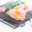 Stock Photo: Album with rose isolated on white