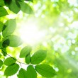 Green leaves — Stock Photo #4113487