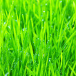 Green lawn — Stock Photo #4256145