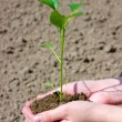 Growing  plant — Stock Photo