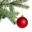 Christmas tree — Stock Photo #4286879