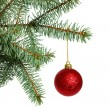 Christmas tree — Stock Photo #4353583