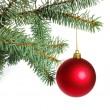 Christmas tree — Stock Photo #4353593