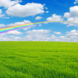 Field and rainbow — Stock Photo