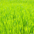 Green lawn — Stock Photo #4620870