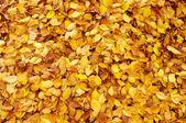 Fallen autumn leaves — Stockfoto