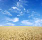 Wheat golden — Foto Stock
