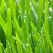 Green lawn — Stock Photo #4832749