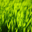 Green lawn — Stock Photo #4920541