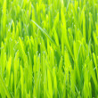 Stock Photo: Green lawn