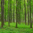 Trees in spring - Stockfoto