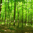 Green forest - Photo